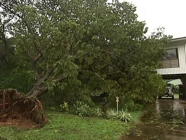 Карлос валит в австралии деревья и